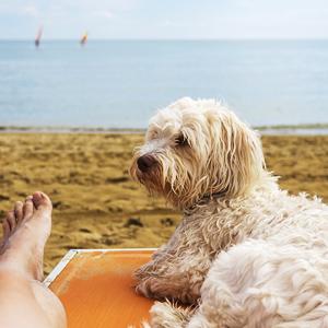 Mascota en la playa