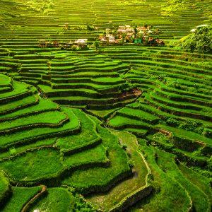 Terrazas arroceras en Filipinas