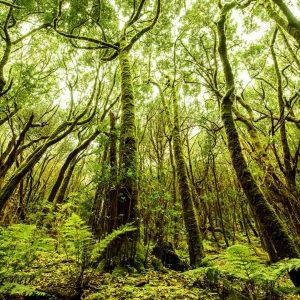 Bosque en el Parque Nacional de Garajonay
