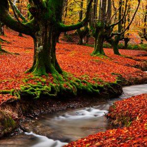 Bosque de Gorbeia