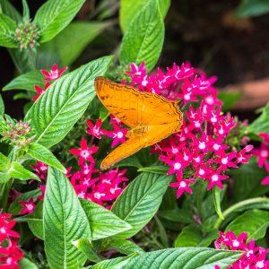 Jardín de mariposas en el aeropuerto