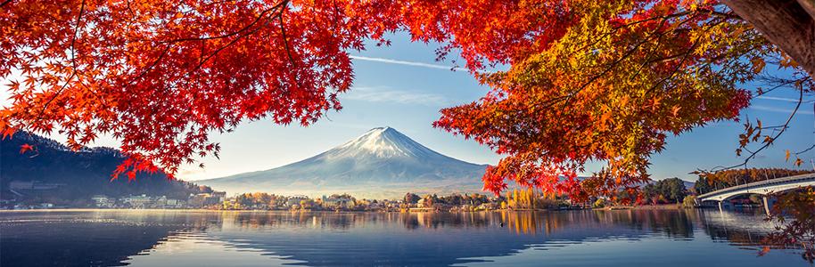 Japón momiji