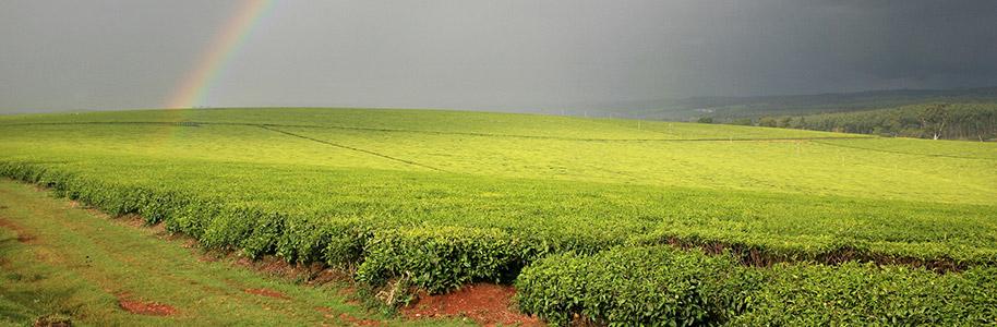 tierras altas del Valle del Rift