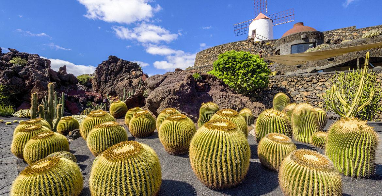 Lanzarote. Jardín de cáctus