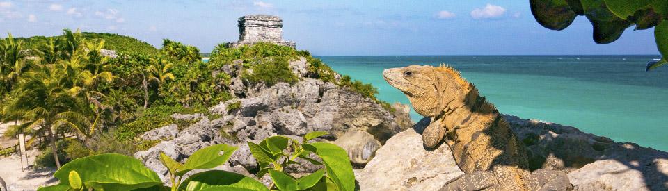 calidad real ventas al por mayor venta caliente barato Ofertas Riviera Maya